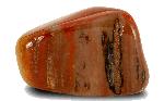 Petrified Wood strong stone for healing base chakra